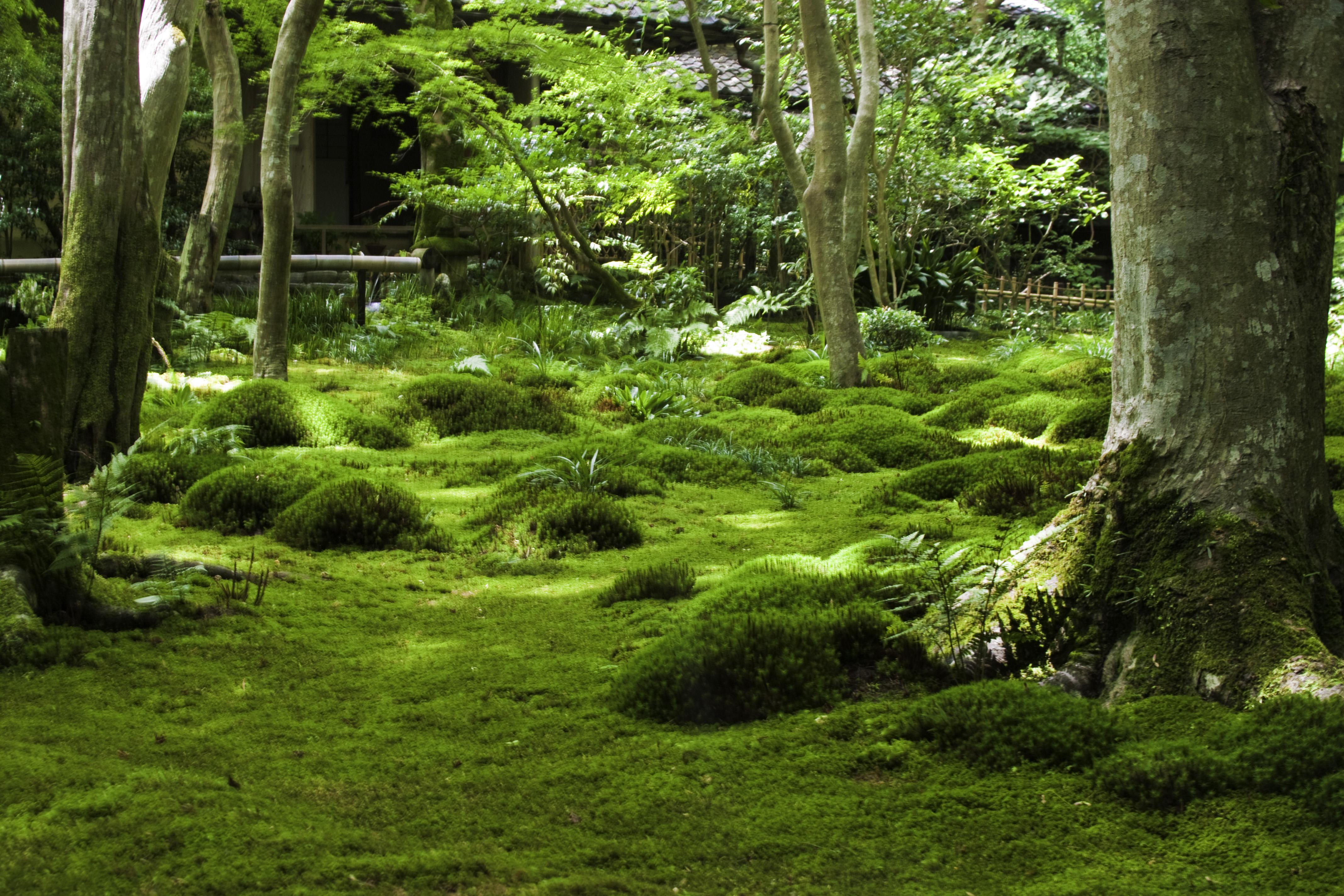 Arashiyama Forest; Gioji, Daikakuji, Ryoanji, and ...